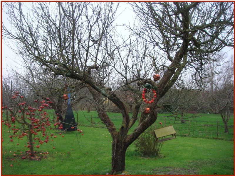 Æblekrans i træ stort perspektiv