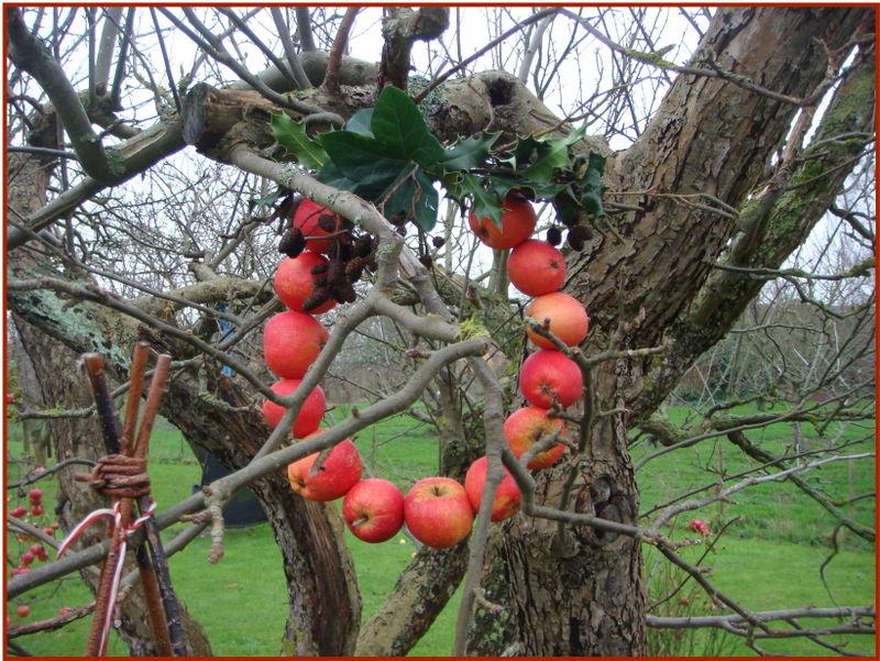 Æblekrans i træ