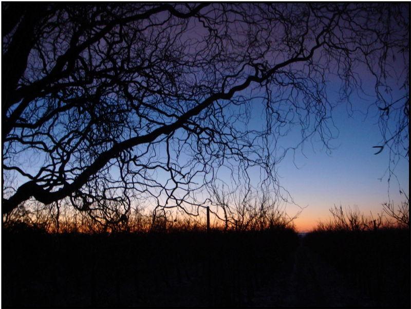 Troldpilens solopgang