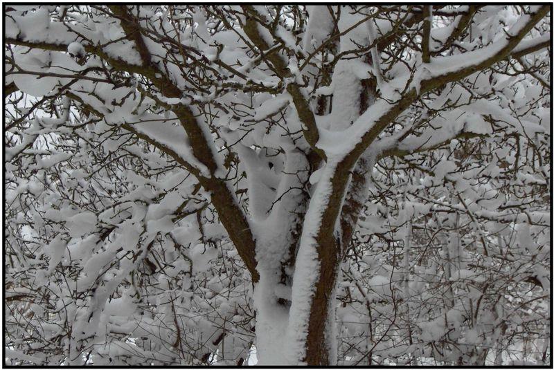 Vintersolhvervs træ lys og mørke