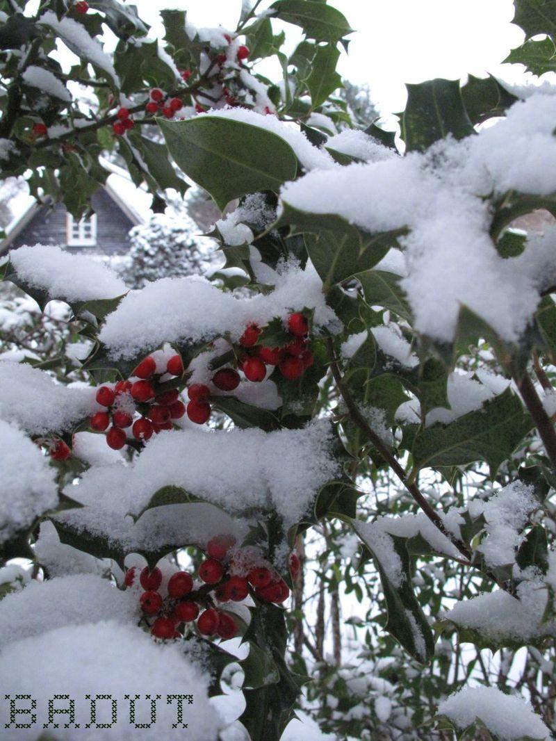 Sne på kristorn