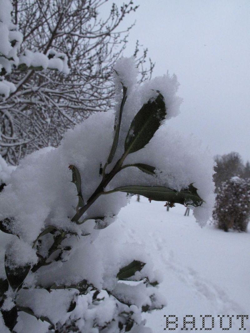Sne på kristorn ved figen