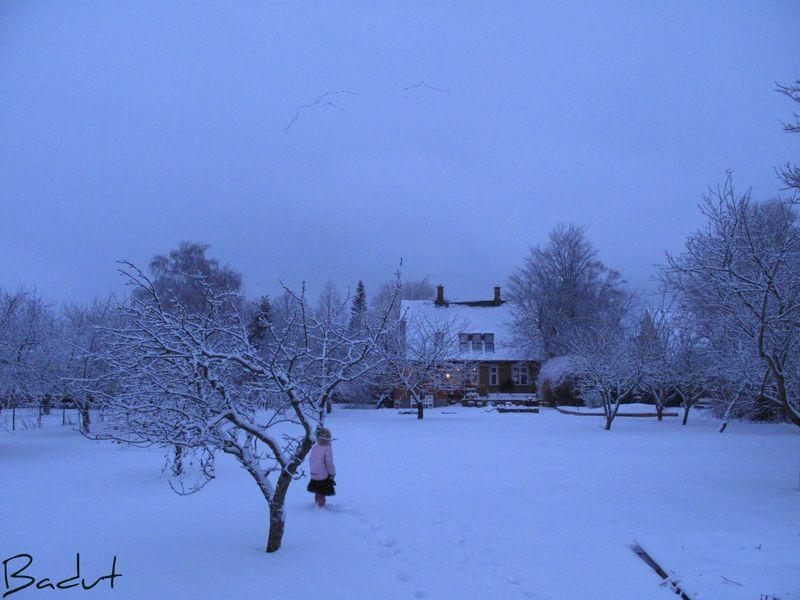 Morgen i hvidt gæs over haven