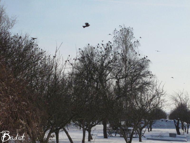 Fugle over haven