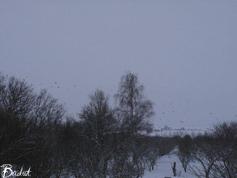 Fugle over æblehave