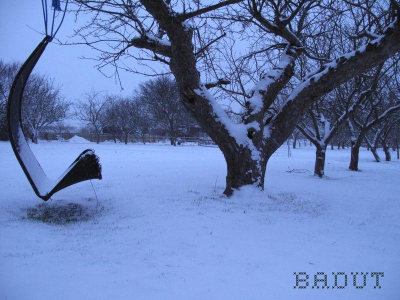 Sne på det gamle æbletræ