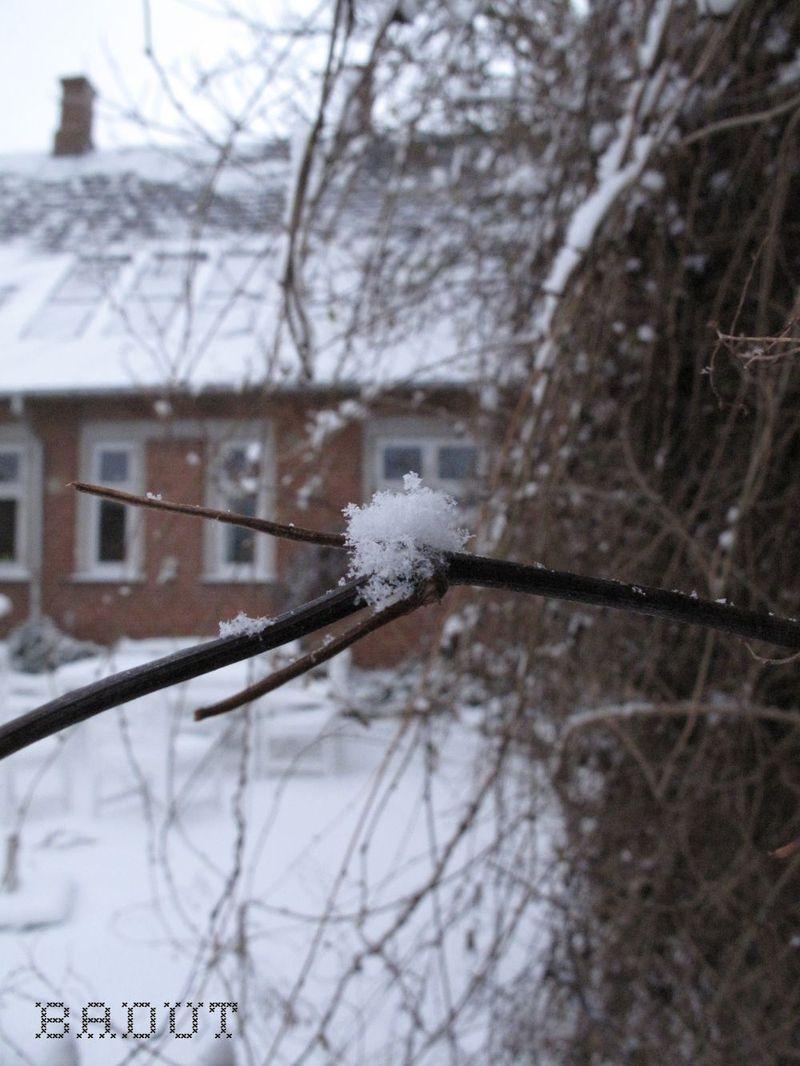 En lille tot sne