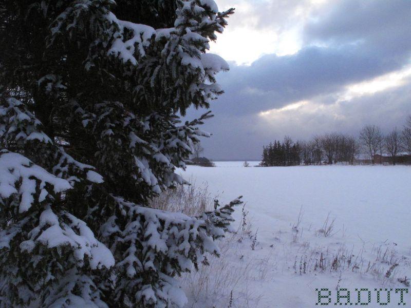 Graner med udsigt til sne