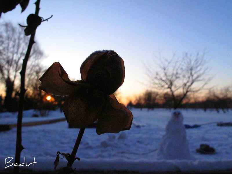 Vissen rose i solopgangen
