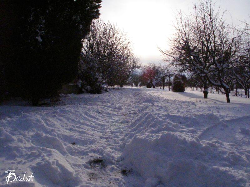 Kyndelmisse sne i haven
