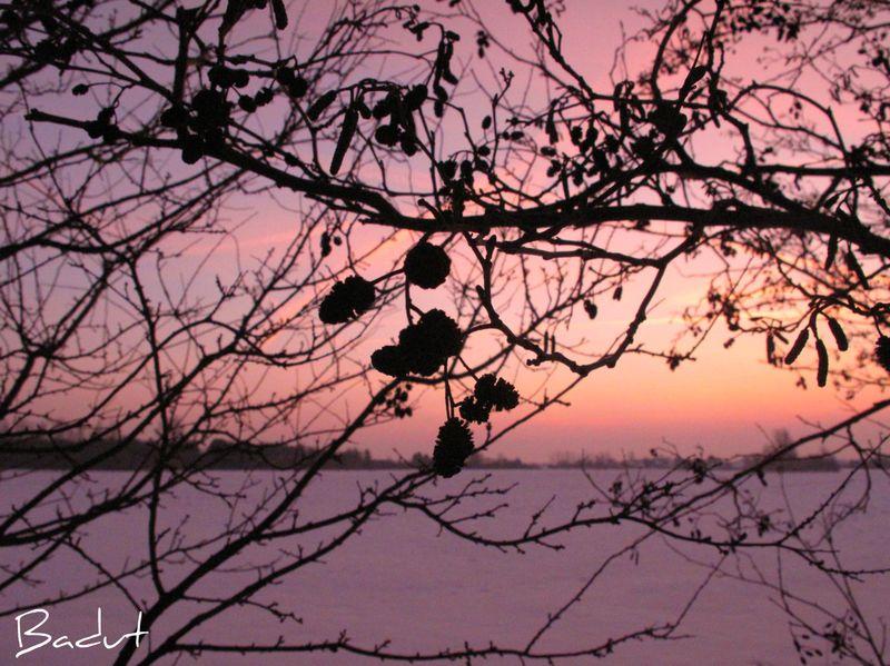 Lyserød morgen