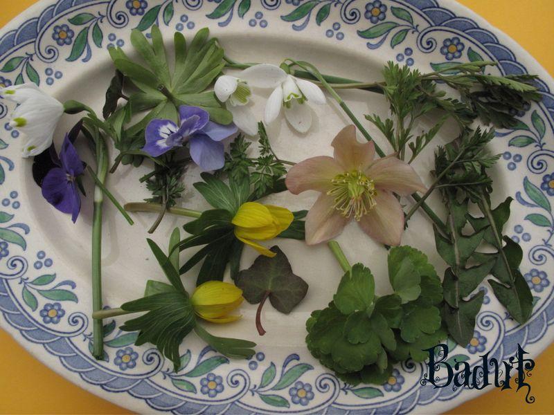 Løgskalle æg blomster