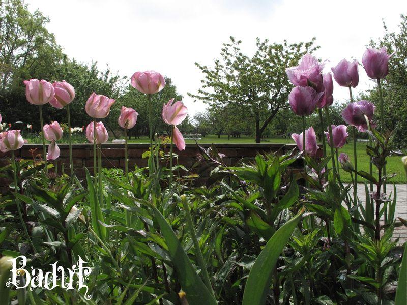 Udsigt ud i haven