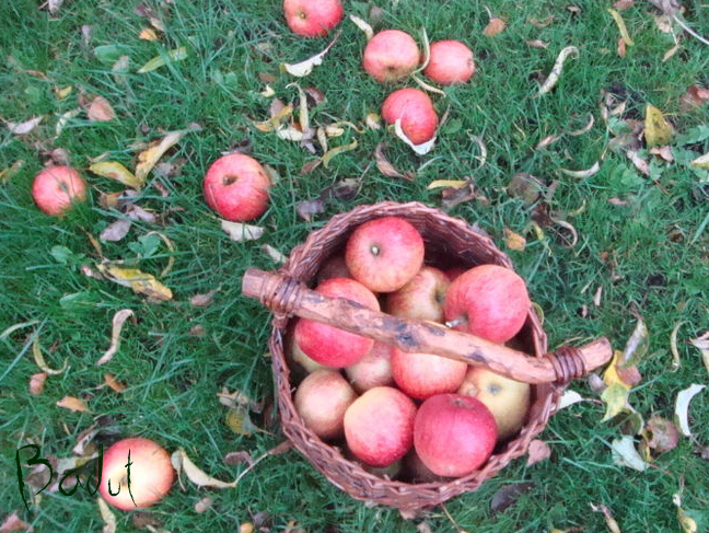 æbler i kurv til kandiserede æbler