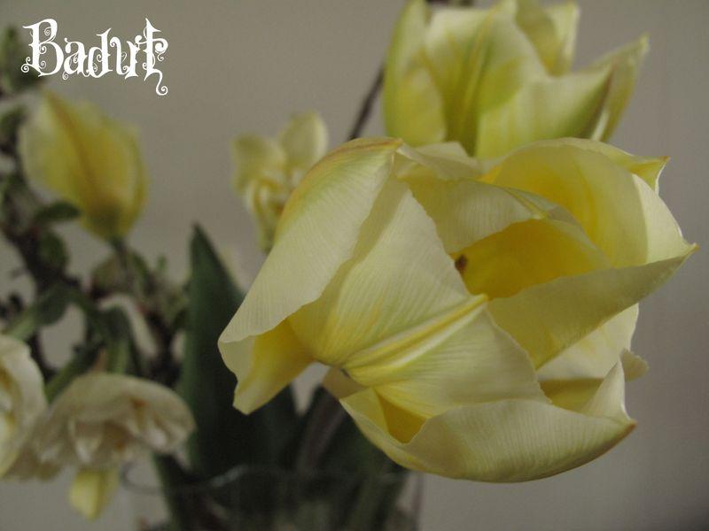 Sweetheart i vase