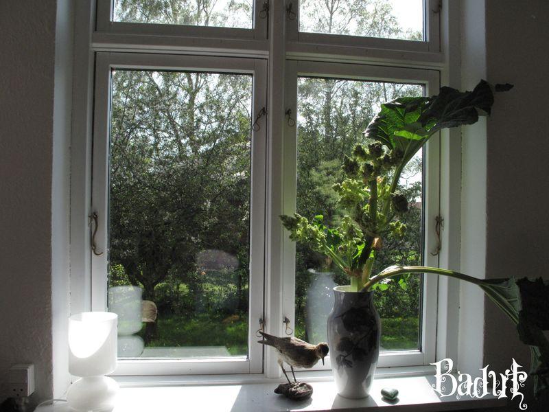 Rabarber i vase