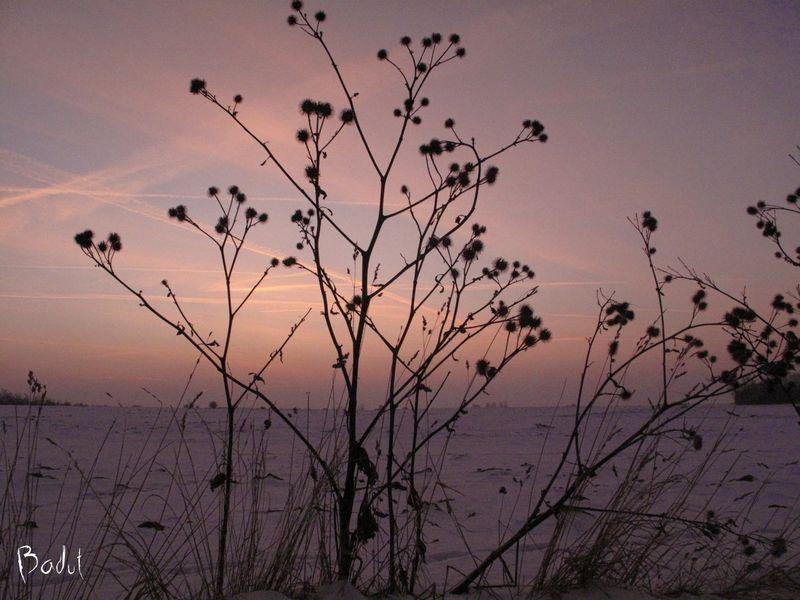 Vinterbilled  morgen i farver