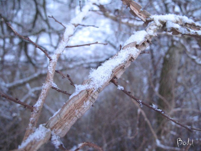 Korkelm med sne