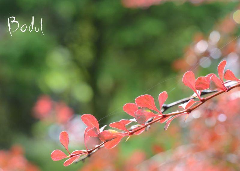 Efterårsjævndøgn i glødende farver