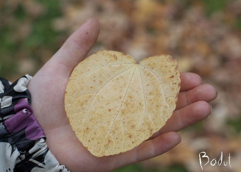 Hjerteblad i hånd