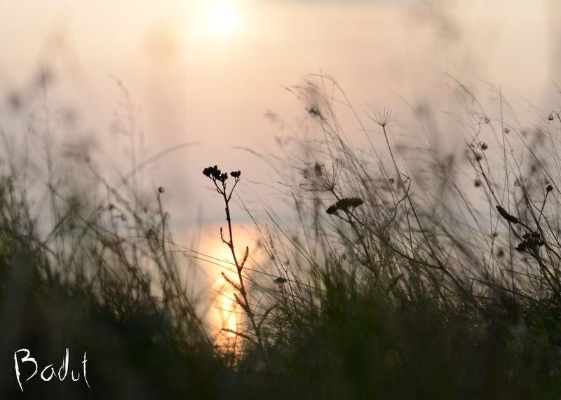 Solen ved Humlum fiskeleje