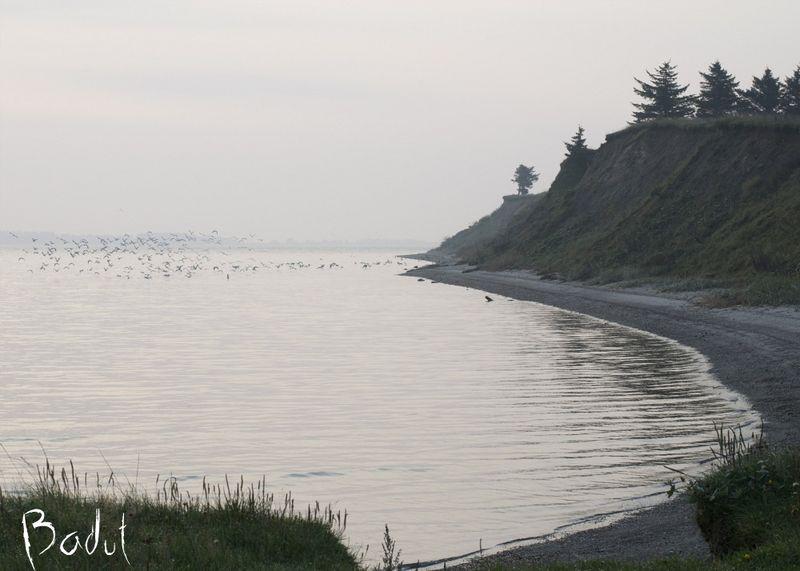 Måger ved Humlum Fiskeleje