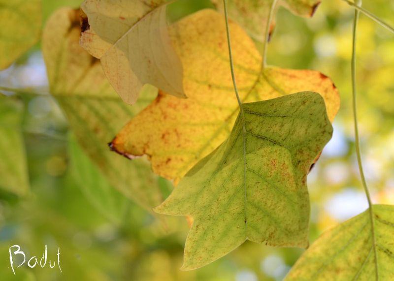 Smukke efterårsblade