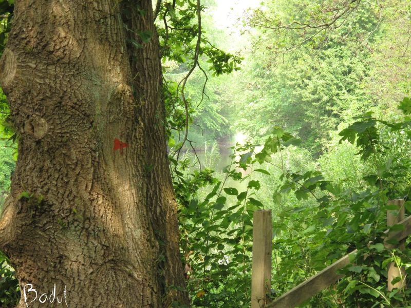 Gennem skoven, langs åen