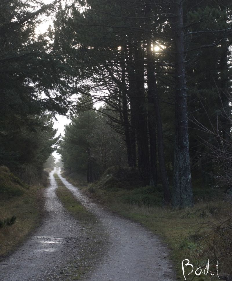 Nye veje