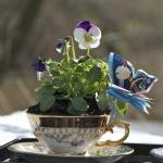Lille Forår i en kop
