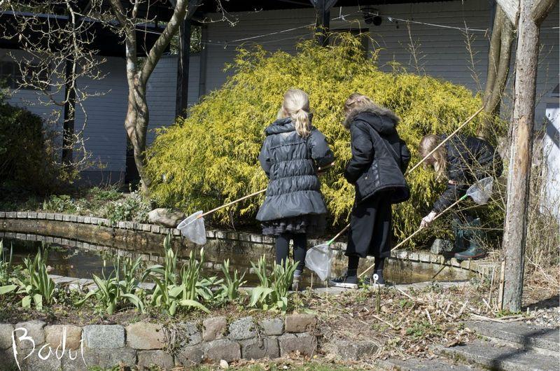 Liv ved magnoliadammen