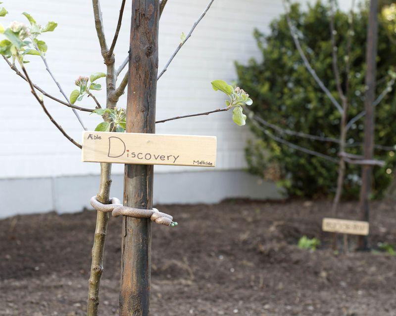 Discovery træ