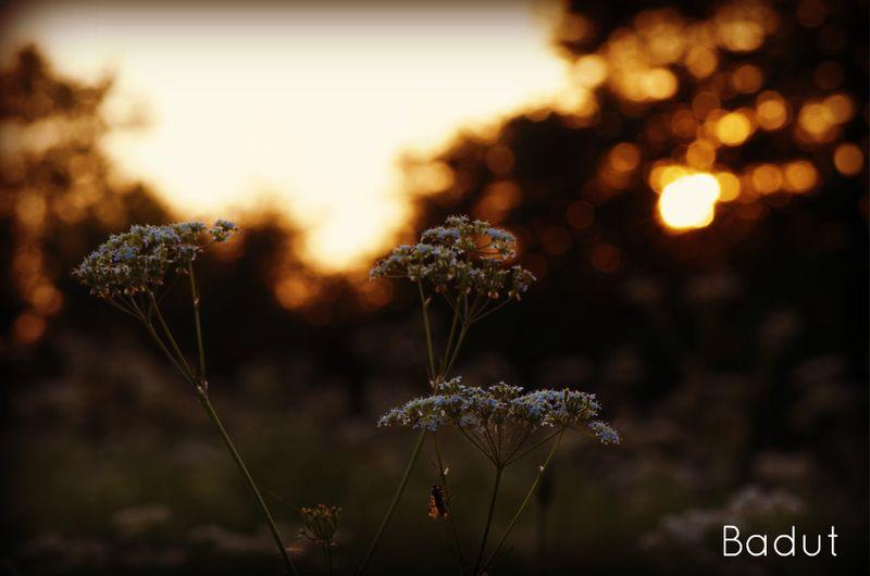 Når solen danser