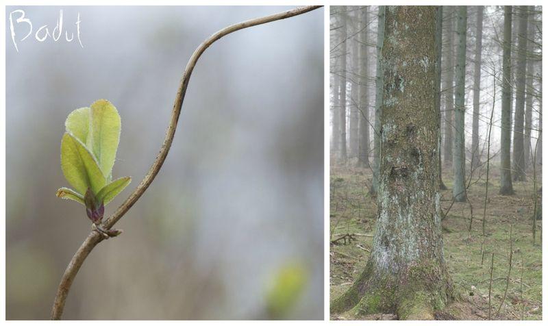 Forår i skoven