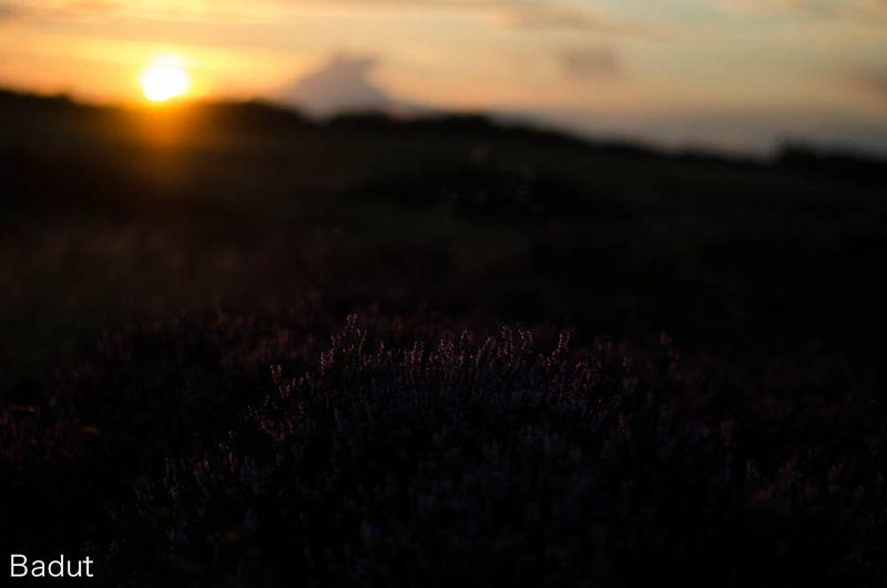 Solnedgang på heden før