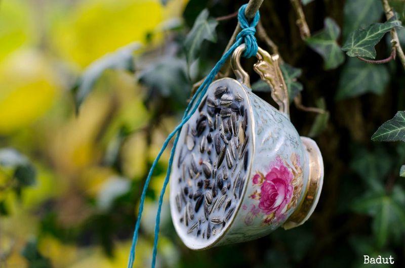 Fuglefedt i smukke kopper
