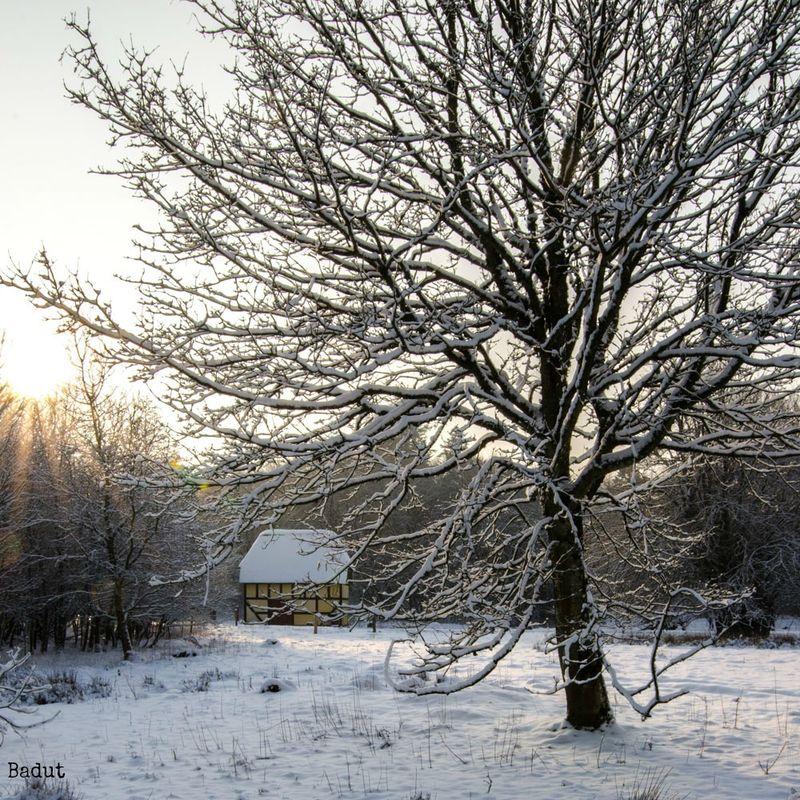 Vinter hvidt og sol