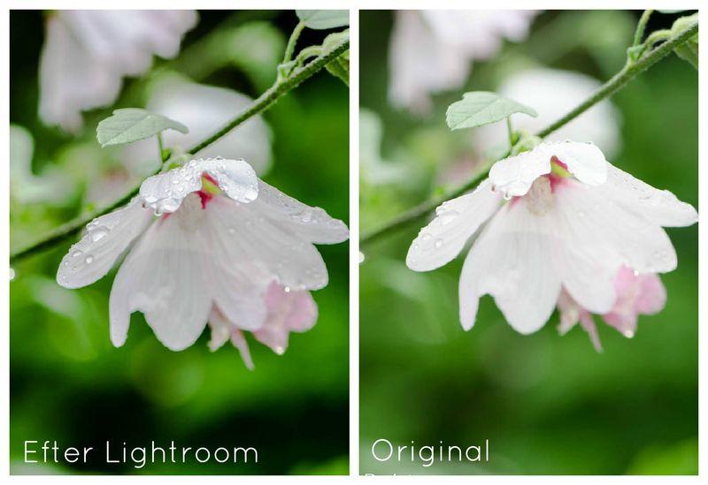 Blomst lightroom