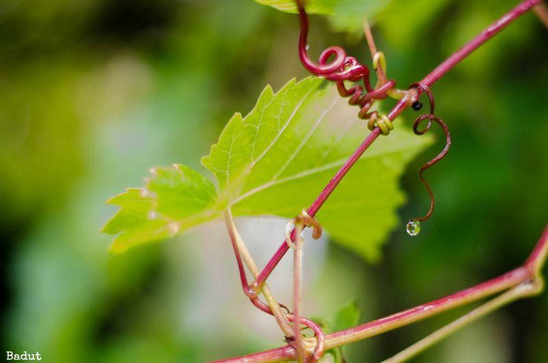 Vin i septemper