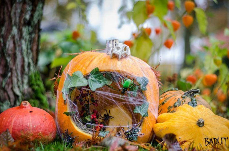 Halloween græskar ide