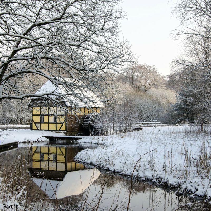 Vinter hvidt den gule mølle