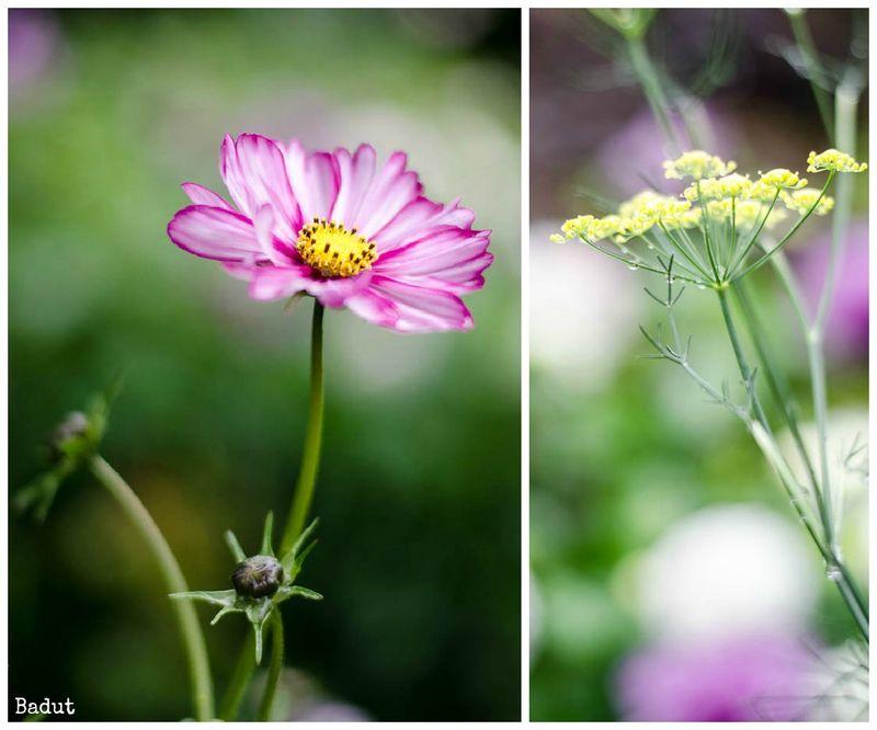 Regnvejrs blomster i septemper