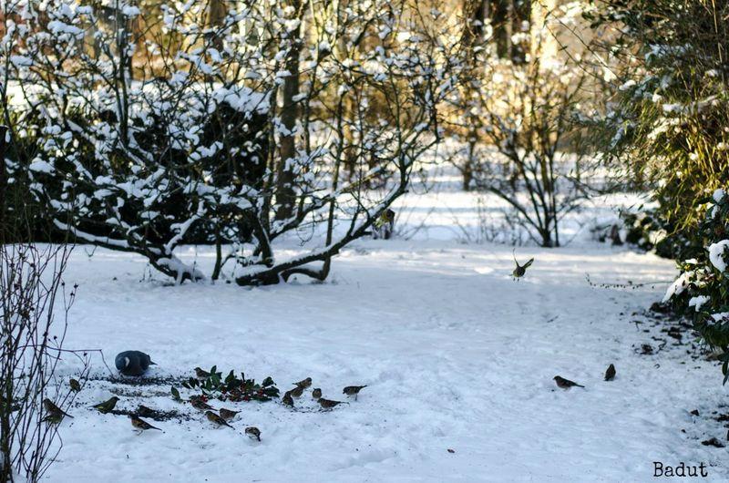 Fuglefodring- masser af fugle