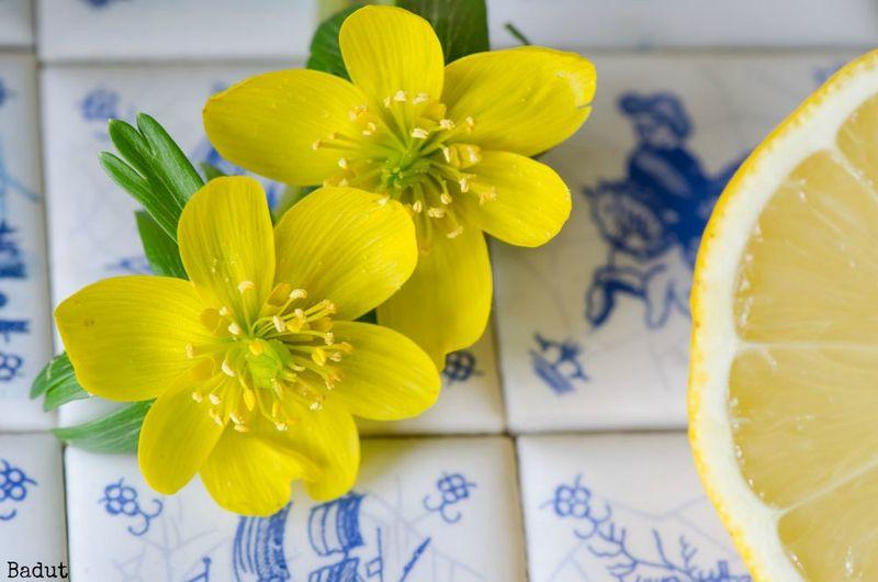 Erantis og citron