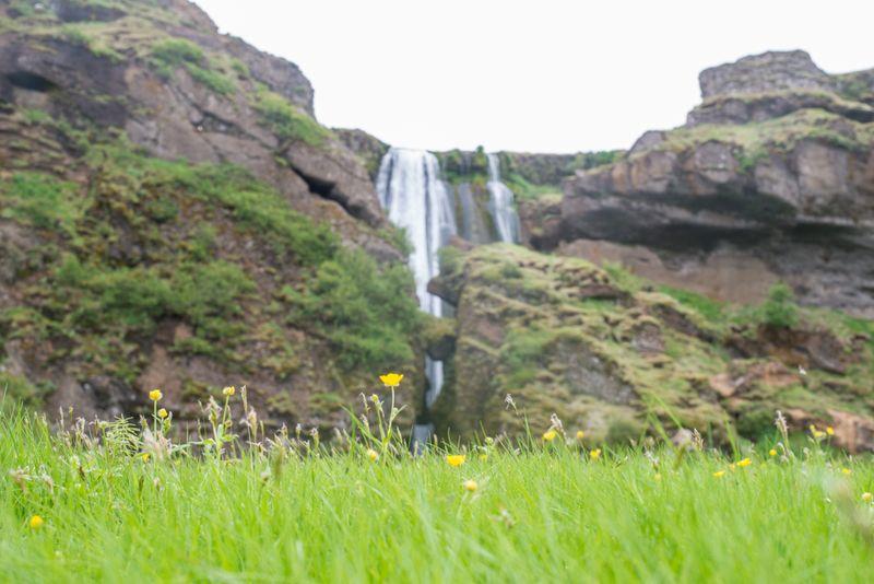 Sommerblomster ved Gljufrabui-2