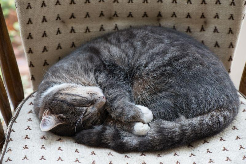 Sovene kat