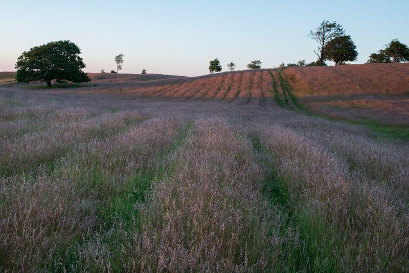 Middelalderens højryggede agre