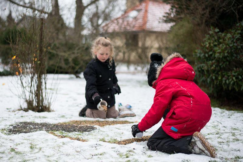 Sneengel med fuglefrø