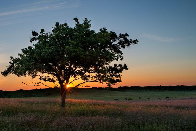 Solnedgang ved Agri Bavnehøj