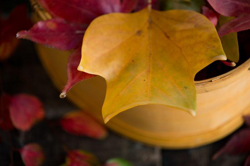 Smukke voksede efterårsblade